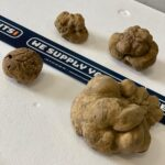 Alba_Truffle_We_Supply_Yachts